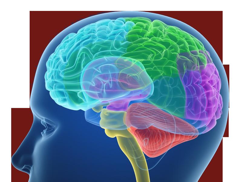 آناتومی اعصاب