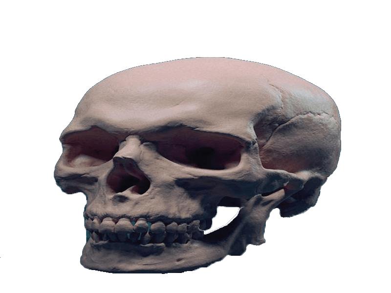 استخوان1