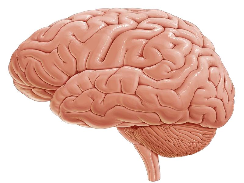 نیمکره های مخ و دیانسفال